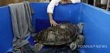 [투데이SNS] 동물원 바다거북 배 안에…동전 915개 발...
