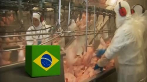 브라질 닭고기/사진=MBN