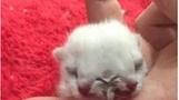 [투데이SNS] 머리 둘 달린 고양이