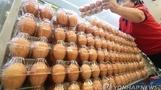벨기에, '살충제 달걀 파문' 책임자에 손해배상 제기
