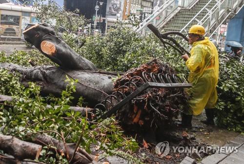 태풍으로 뽑혀진 대만 가로수 /사진=연합뉴스