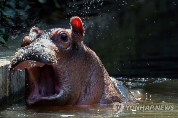 하마 /사진=연합뉴스