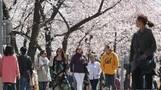 내일 '세월호 5주기' 포근한 봄 날씨…일부지역 밤부터 비