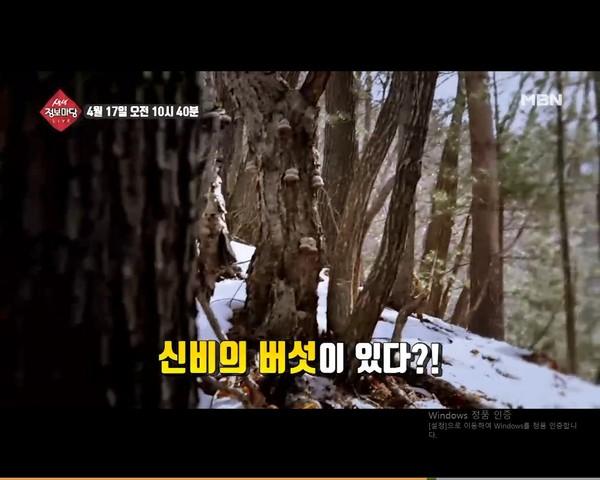 '생생 정보마당' 370회 약초 버섯/사진=MBN