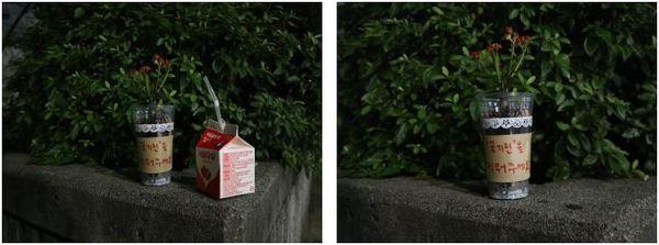 인적이 드문 새벽 몰래 두고 온 꽃기린 화분 / 사진=MBN 온라인뉴스팀<br />