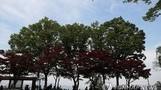 [오늘 날씨] 남부지방 일부 비소식…미세먼지 '좋음'∼'보통'