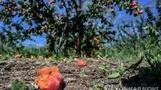 프랑스 남동부 폭풍우 강타…정부 '자연재난사태' 선포 예정
