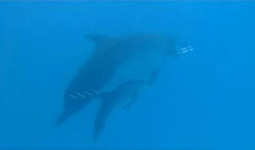 남방큰돌고래 특징/사진=MBN