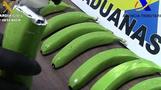 스페인에서 코카인 담은 `마약 바나나` 적발