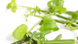 다이어트에 특효인 `시서스 가루` 화제