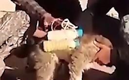 등에 폭탄 매달고 돌아온  납치된 '개와 어린이'