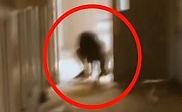 문닫은 정신병원서 발견된  '정체불명' 생물체