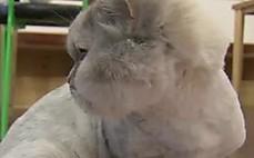 전기레인지 화재사고, 방화범은 고양이?